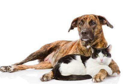 Dog_Like_Cat_Breeds
