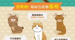 【貓咪面相學】圓臉、方面、倒三角,貓咪性格大不同!