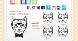 貓眼變變變