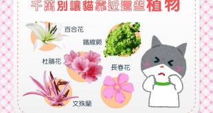 【危險植物別靠近!】貓貓花花好相襯?美麗花朵也暗藏危機!
