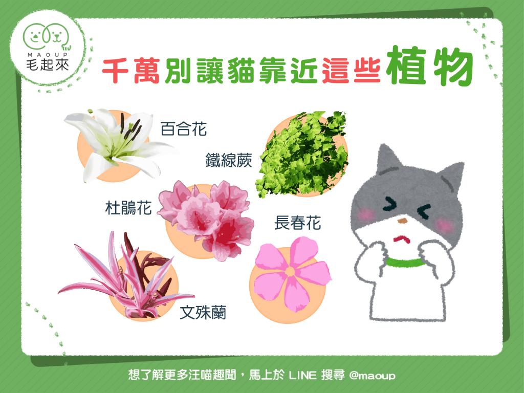 【危險植物別靠近!】貓貓花花好相襯?美麗花朵暗藏危機!