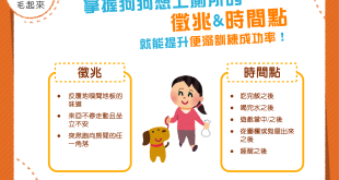 【家有乖狗狗】掌握狗狗便溺時機,廁所訓練成功率大提升!