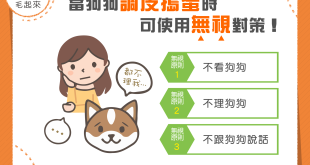 【家有乖狗狗】3大無視原則報你知,改善狗狗行為不是夢!