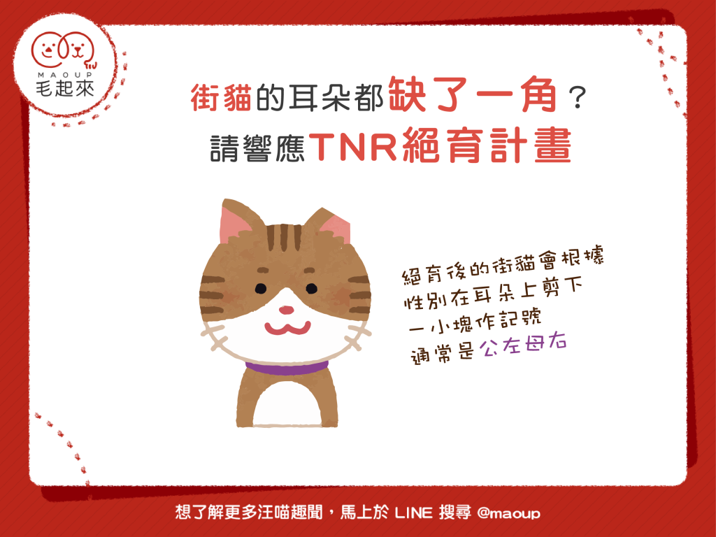 【街貓二三事】貓耳缺一角?請響應TNR絕育計畫