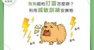 【雷聲隆隆我不怕】減敏訓練123,膽小狗變勇敢狗!