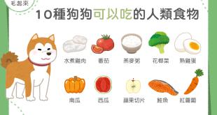 【毛孩食材圖鑑】10 種狗狗可以吃的人類食物