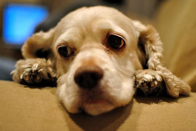 Sad Mumby