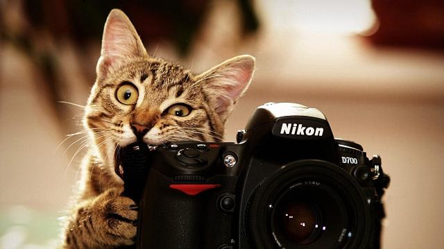 Cat-And-Nikon-D700