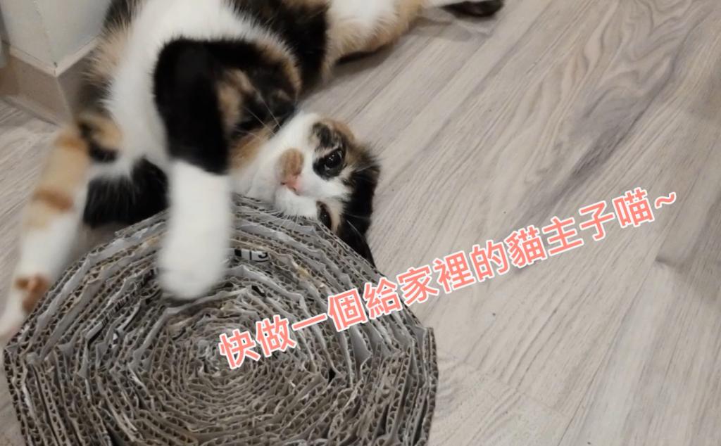 【簡易貓抓板DIY】只要5步驟~大餅貓抓板省錢輕鬆做!