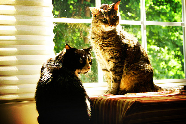 sunshine cats