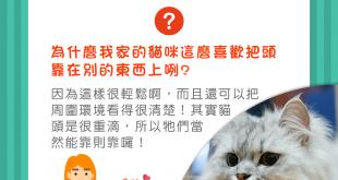 【喵喵毛教室】貓貓這麼喜歡「饋桃」是為什麼呢?