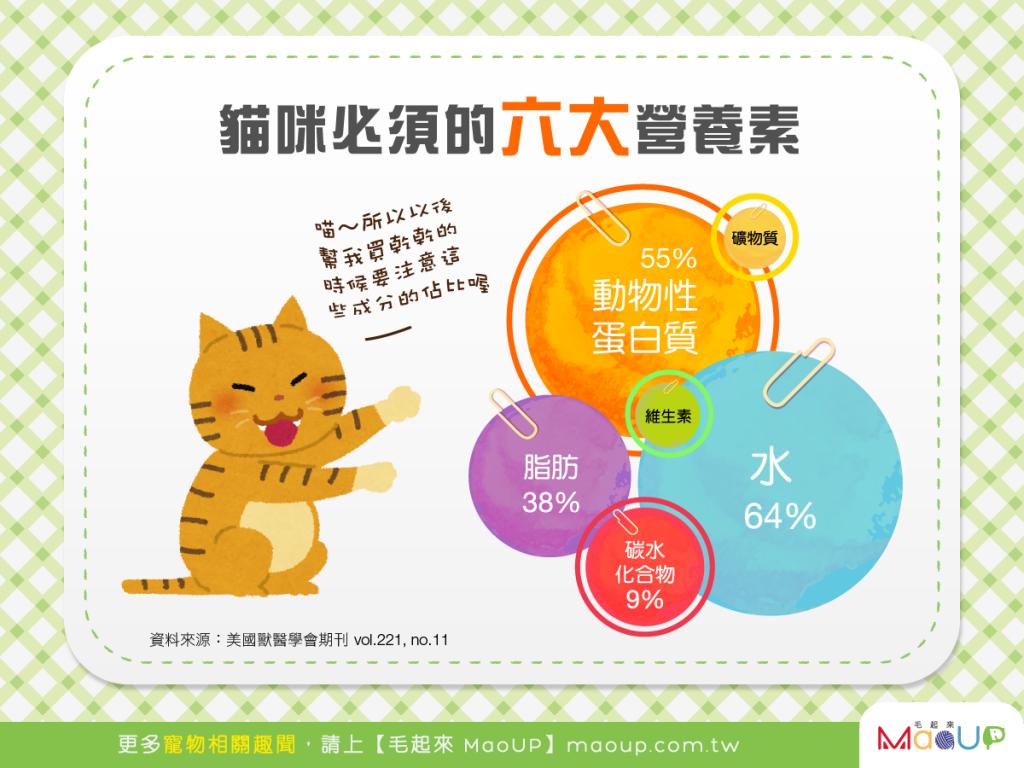 【食在要健康】營養均衡更健康!貓咪必須的6大營養素