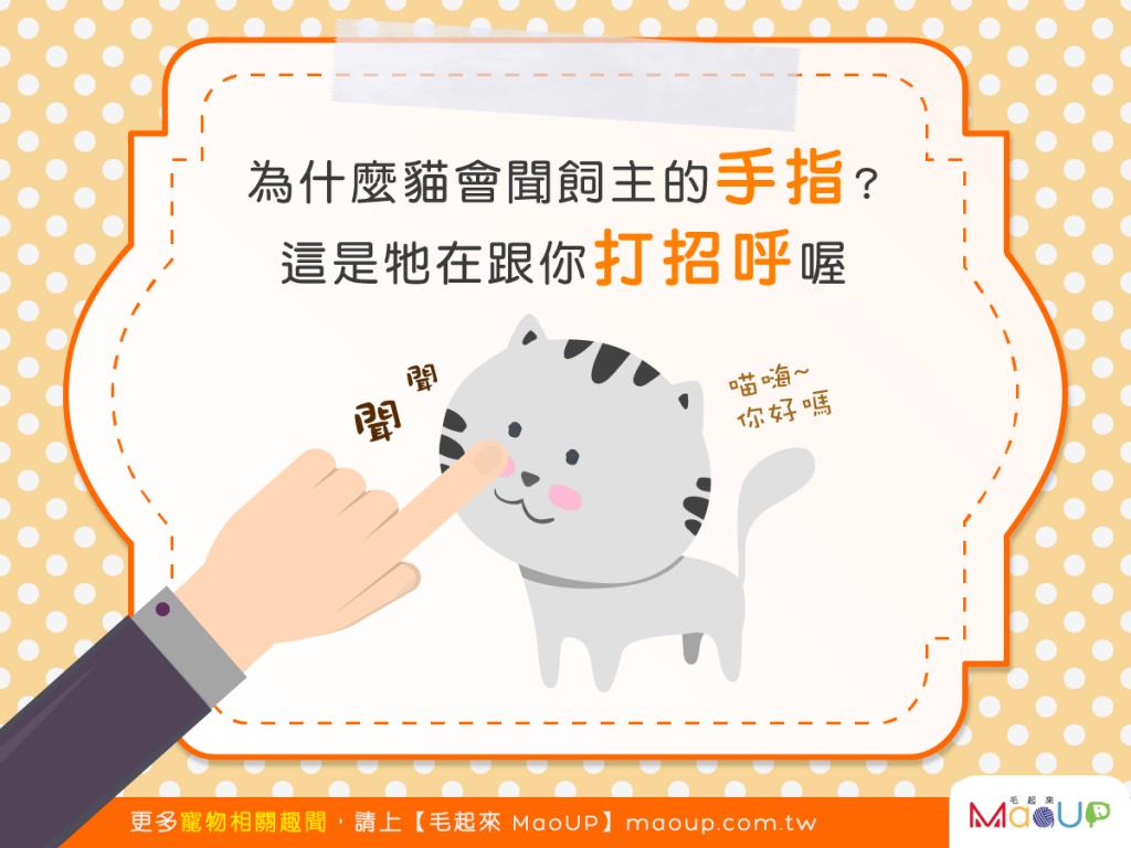 【貓貓都是有禮貓】不聞手指一下不開心?這是貓界的打招呼方式!