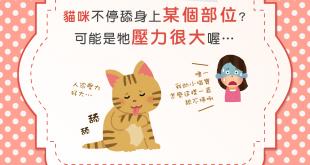 【毛舔太多要注意!】舔舔好舒壓?鴨梨山大的貓咪強迫症!