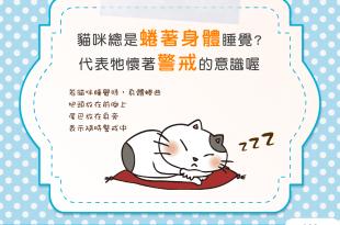 【睡姿大解密】貓貓卷好可愛?牠可能正在全面警戒中喔!
