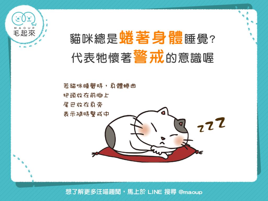 【睡姿大解密】貓貓卷好可愛?牠可能正在全面警戒中!