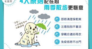 【雨季出門趣】4大原則記在心,雨季散步更愜意!