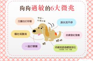 【汪汪康健】我家也有過敏兒?!快來看看狗狗過敏的6大徵兆!