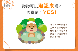 【汪汪泡湯趣】狗狗可以泡溫泉嗎?答案是YES!