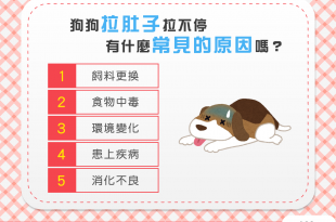 【汪汪康健】狗狗肚子拉不停?5大原因要注意!