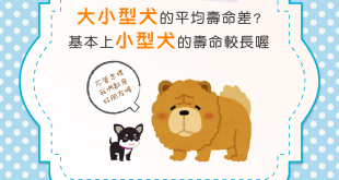 【汪汪豆知識】大型犬還是小型犬長壽?基本上是小型犬!