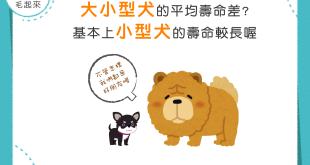 【汪汪豆知識】大型犬還是小型犬長壽?基本上是小型犬喔!