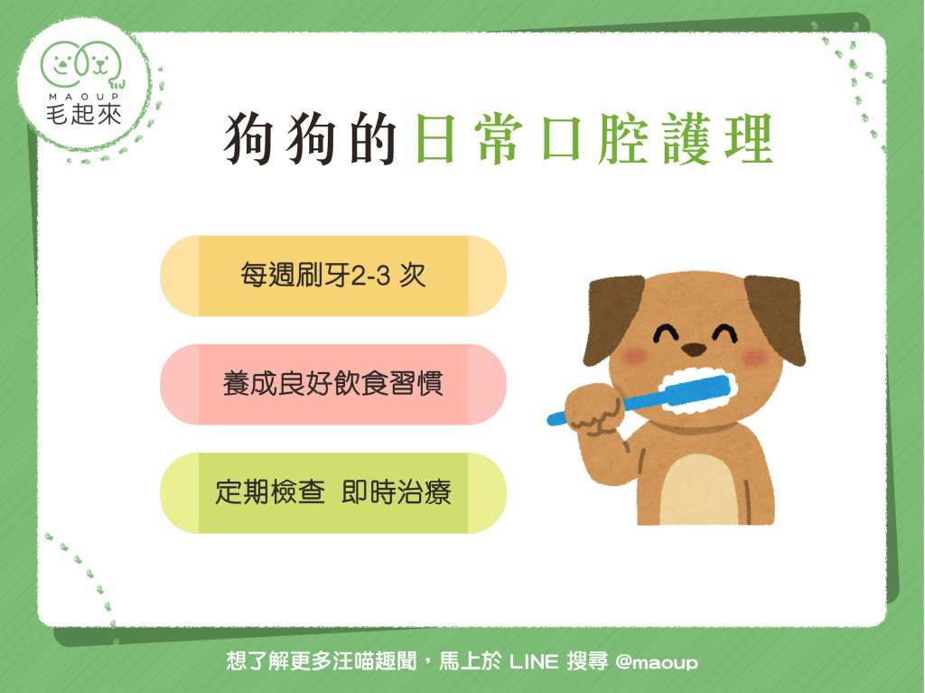 【狗狗的日常口腔護理】3大要點~讓狗狗跟臭臭嘴Say Goodbye!