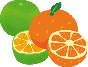 柑橘屬味道