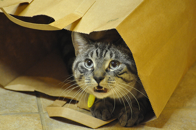 Teddy The Bag Cat, meowing
