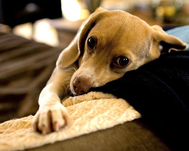誰都別想拆散我和我的小毯毯!