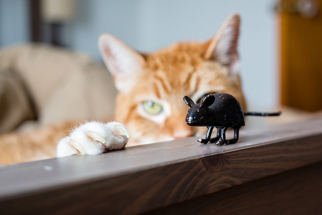 Watch out Mouse!