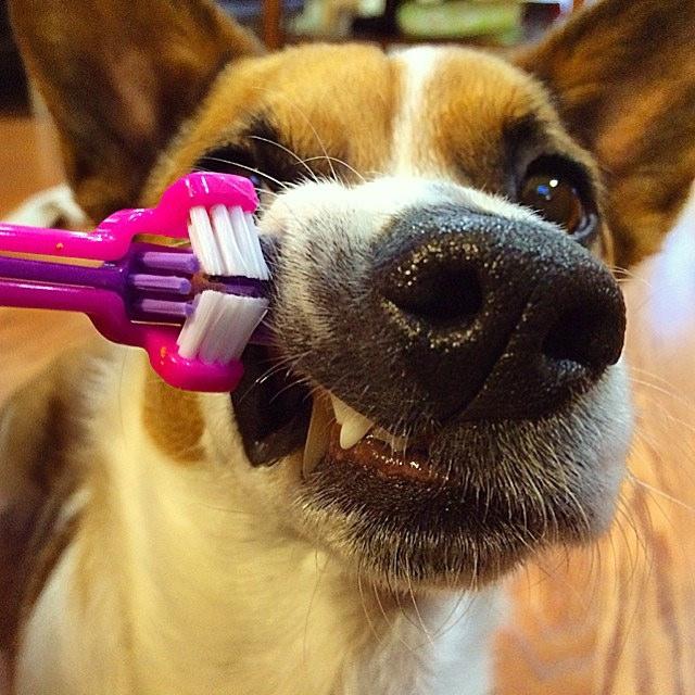Mr. Toothbrush