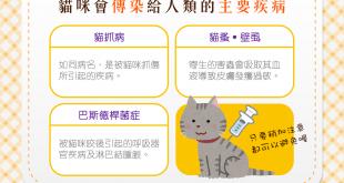 【跟貓玩耍要注意!】貓咪會傳染給人類的3大主要疾病