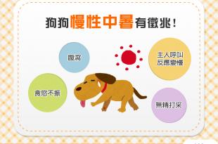 【汪汪康健】日頭赤炎炎!狗狗慢性中暑的4大徵兆!
