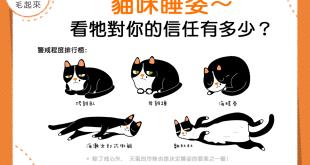 【信任大考驗!】從貓咪睡姿~看牠對你的信任有多少?