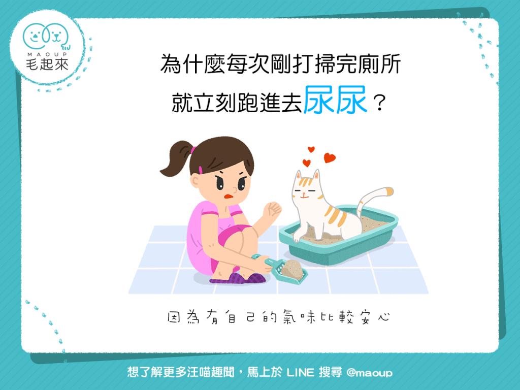 【貓咪行為學】清完貓砂就去尿?有自己的氣味才安心!