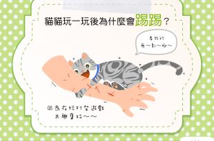 【貓咪行為學】貓咪為何使出無影腳絕招?因為在玩打架遊戲啊!