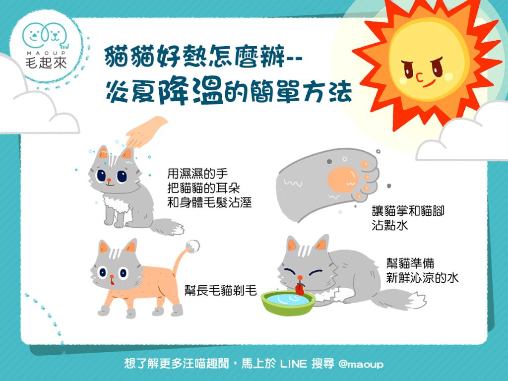 【清涼喵一夏】貓貓好熱怎麼辦?炎夏降溫的4個簡單方法