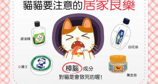 【生活中的暗藏危機!】人的居家良藥,卻是貓的毒藥?!