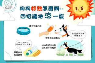 【清涼汪一夏】狗狗好熱怎麼辦?4招讓牠涼一夏!