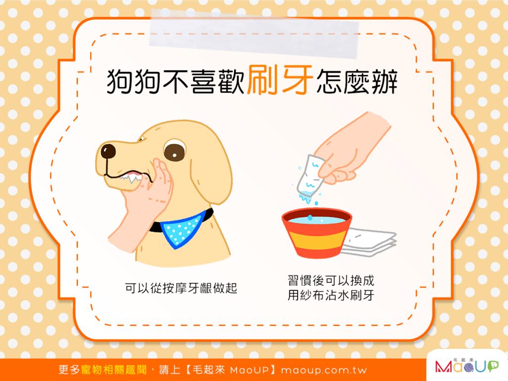 【別再狗齒不清了!】口腔保健好重要,但狗狗討厭刷牙怎麼辦?