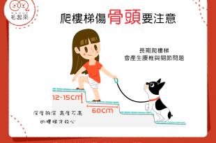 狗狗爬樓梯,脊椎和關節容易出問題