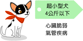 超小型犬 4公斤以下 吉娃娃 心臟脆弱 氣管疾病