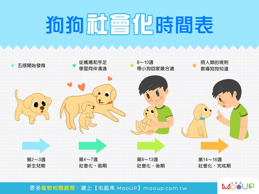 【教好狗狗,從小開始】狗狗的社會化時間表