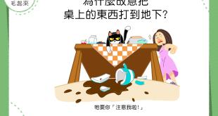 【一個都不留】貓咪為什麼故意掃空桌面?只為吸引你的注意啦!