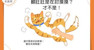 【貓咪行為學】貓咪翻肚肚是在討摸摸?這只是信任的表現啦!