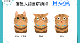 【貓語大揭密!】喵星人語言解讀術~耳朵篇~