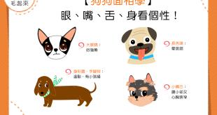 【汪汪面相學】狗狗也能看面相?眼、嘴、舌、身看個性!