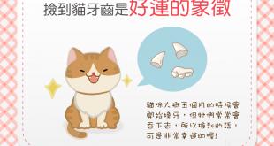 【幸運貓齒】你有撿過貓牙齒嗎?這可是好運的象徵喔!