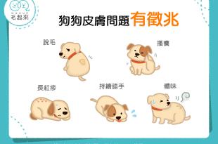 【汪汪康健】煩人的皮膚病找上門?!狗狗皮膚問題的5大徵兆